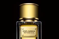 CROSSLINKS_dolce and gabbana velvet mimosa bloom perfume