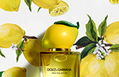 dolce and gabbana fruit collection lemon_YMAL_170x110